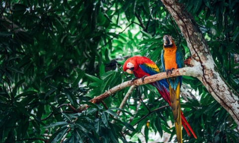 Welcome to the jungle: Costa Rica