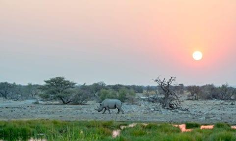 Namibia: Zoo ohne Zäune