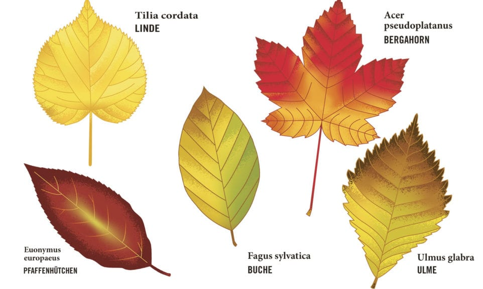 (R)Ausbildung: Herbstgold