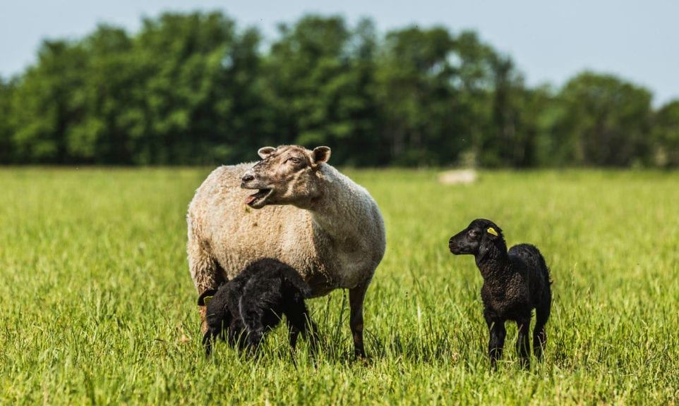 Das Comeback der Wolle