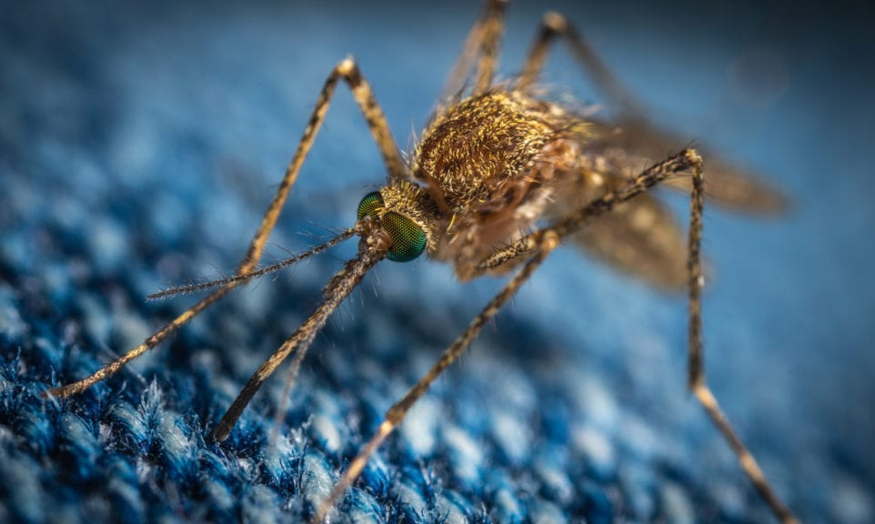 Kaufberatung Insektenschutz