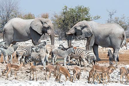 Wildlife im Etosha-Nationalpark