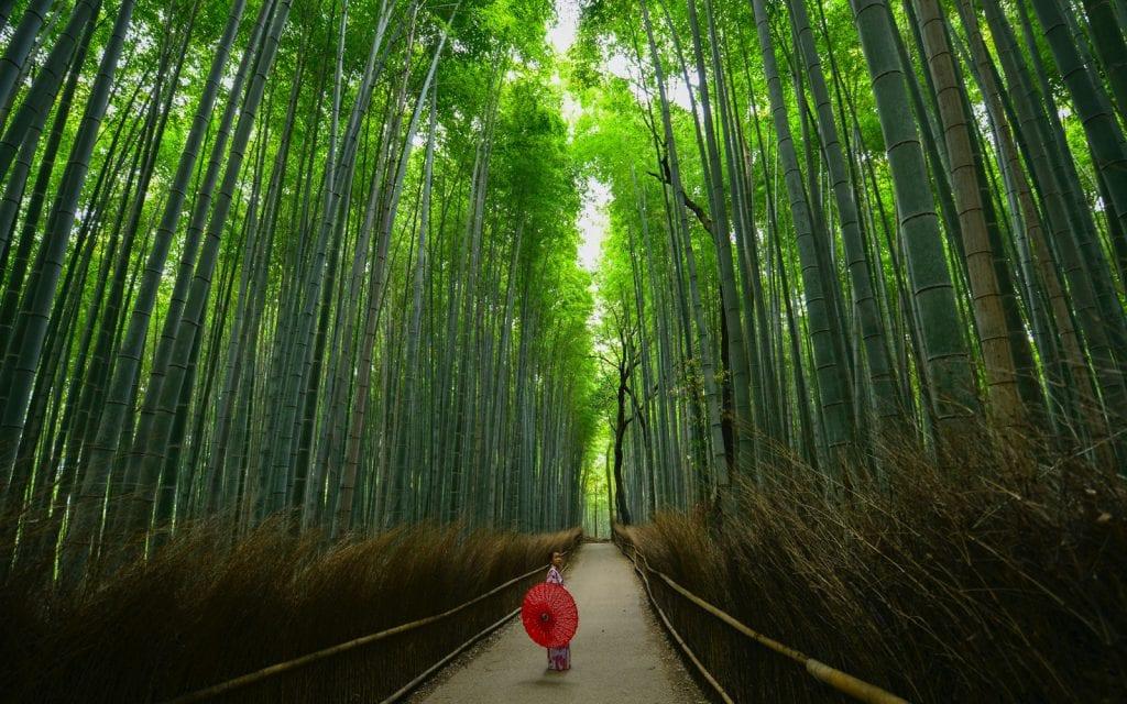 Bambushain in Kyoto in Japan