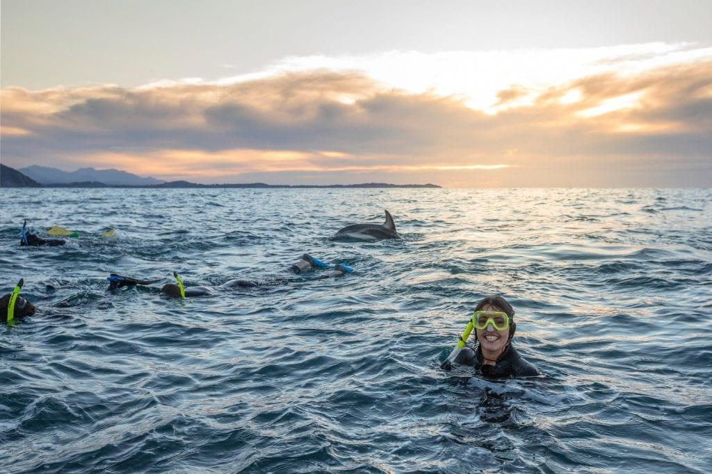 Schwimmen mit Delfinen in Kaikoura, Neuseeland