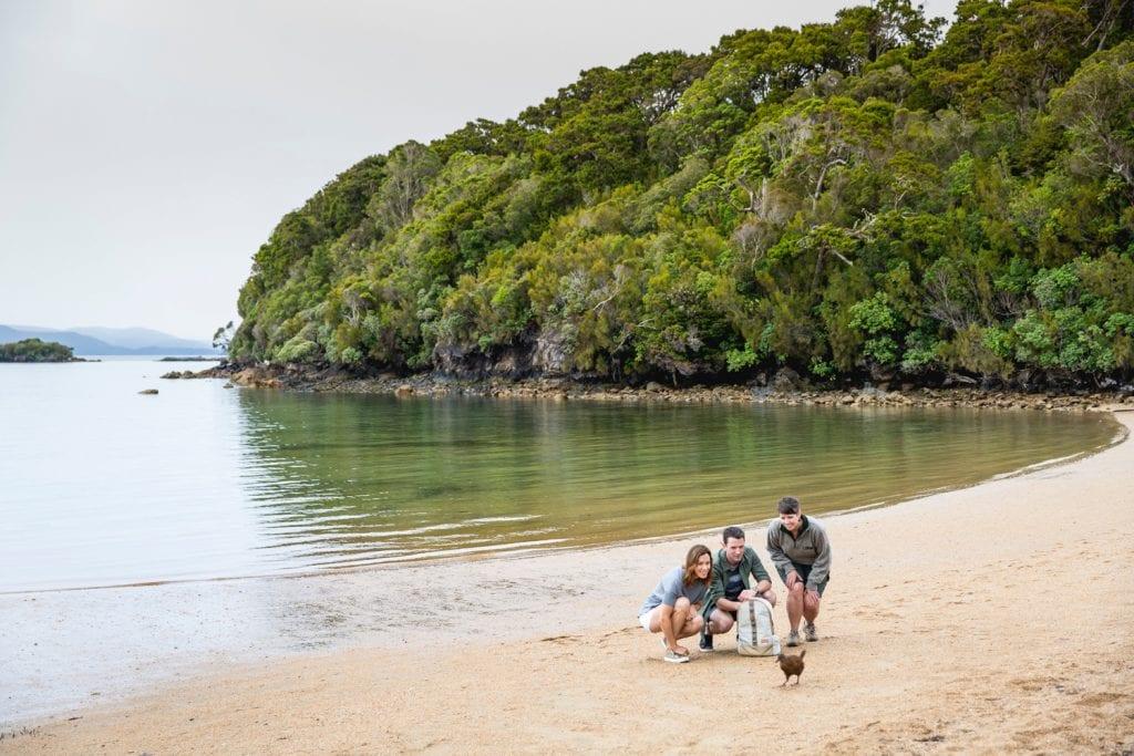 Kiwi am Strand auf Stewart Island, Neuseeland