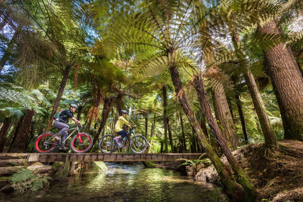 Mountainbikem im Whakarewarewa Forest, Neuseeland