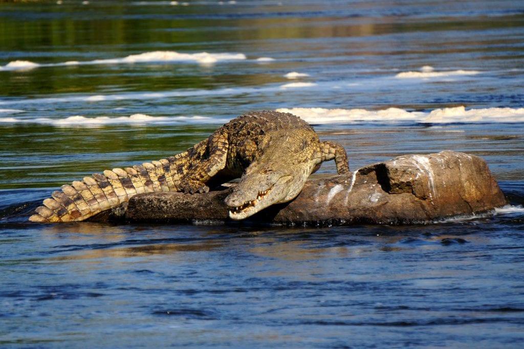 Uganda-Rottmann-Krokodil-1
