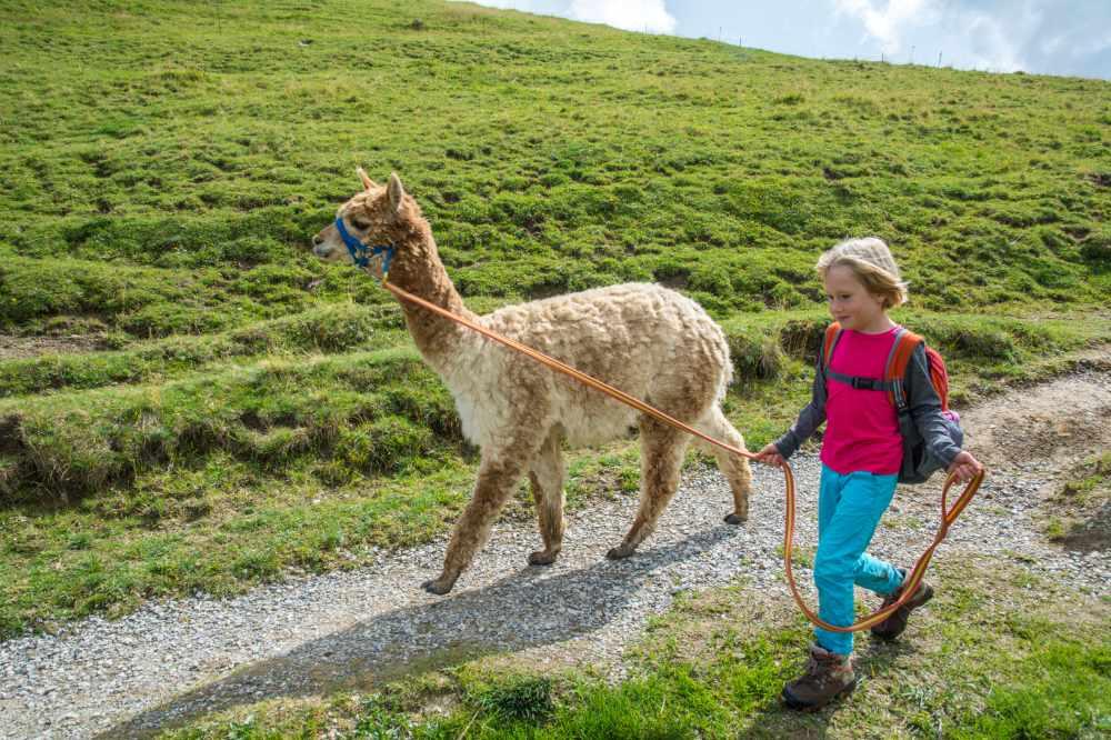 Kein Meckern und kein Murren. Wenn man das Lama führen darf, sind Kinder super motiviert.