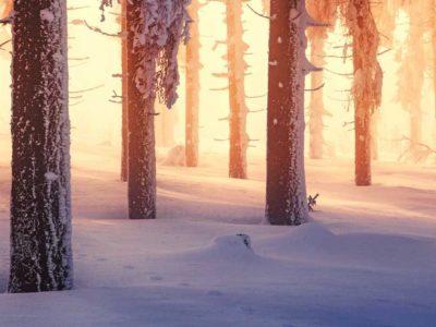 Deutschland, Wintermärchen